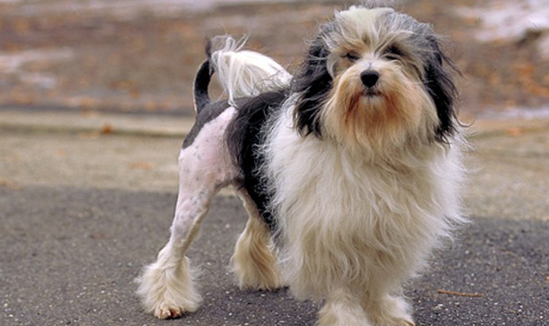 Top 10 Most Expensive Dog Breeds In The World: Are Akitas ...