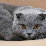 Top 12 Most Expensive Cat Breeds In The World: Savannah vs Bengal